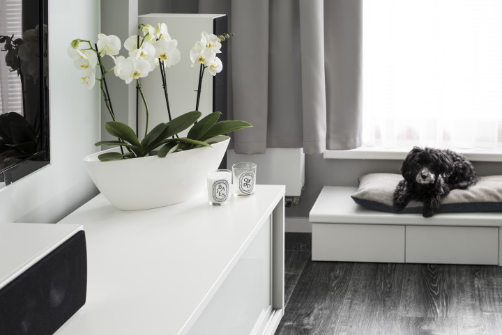 Byt s šedou podlahou - pohodlný koutek pro chlupáče
